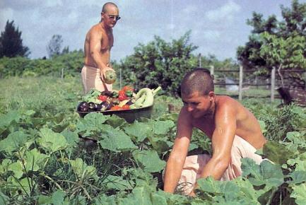 Devotees Cuting The Vegetable