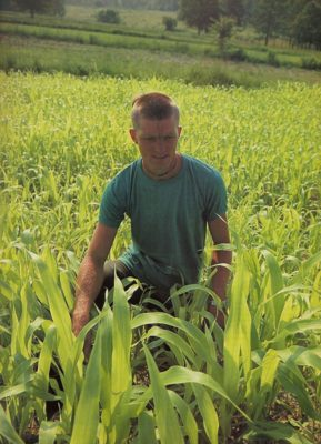 Sorghum Yields A Sweet Syrup That Replace Sugar