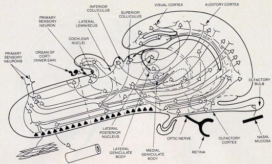 Searching Past the Mechanics of Perception by Sadaputa Dasa
