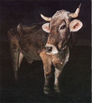 Consider the Cows  by Visakha Devi Dasi