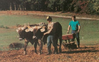Devotee Farming