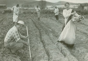 New Gokul Farm