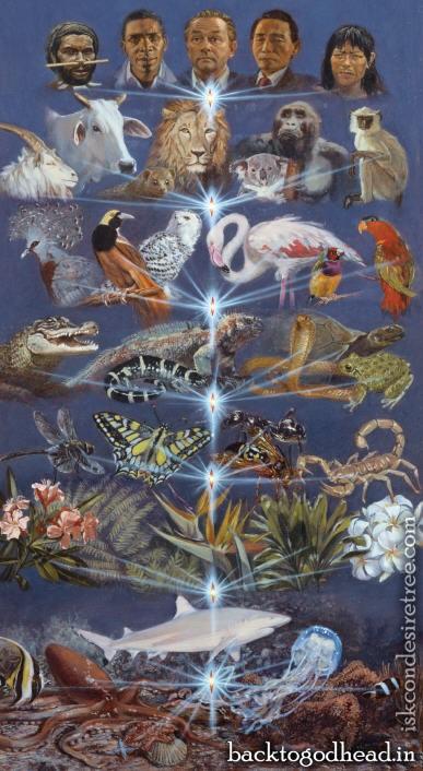 The Evolution Of Consciousness - Back To Godhead
