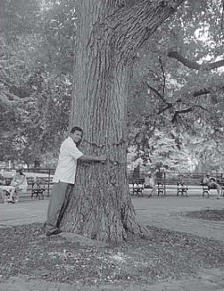 Just To Embrace a Tree
