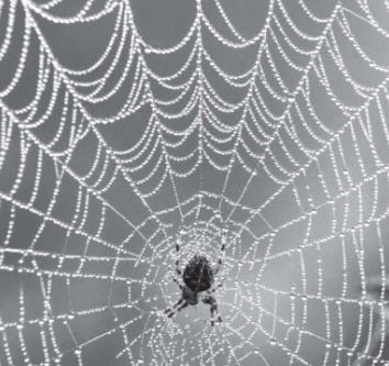 Maya And The Spiders Web