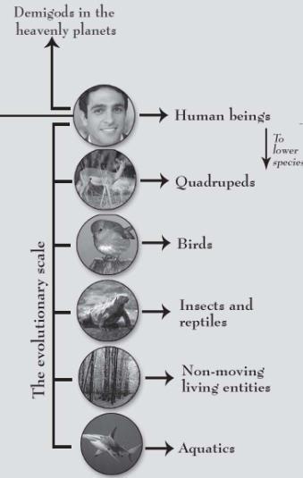 Human Form Of Life