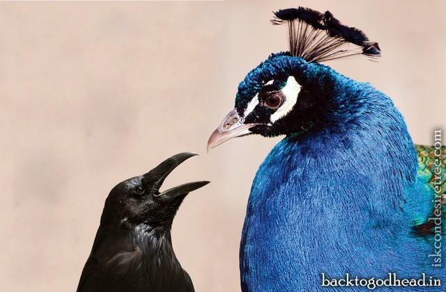 The Crow Story by Yugavatara Dasa