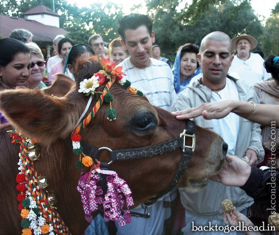 Sacred Cows and other Slurs by Mathuresa Dasa