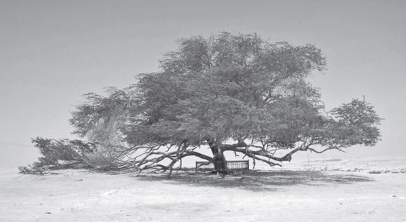 The Tree of Life by Kalyani Ajrekar