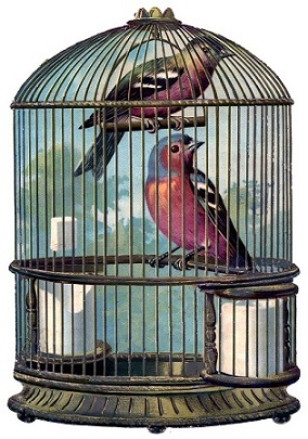 Caring For the Bird Adapted by Tattvavit Dasa